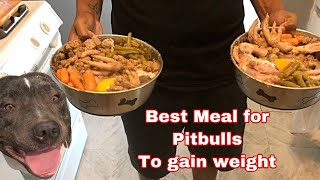 What to feed Pitbulls for massive weight gain