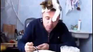 смотреть видео про кошек