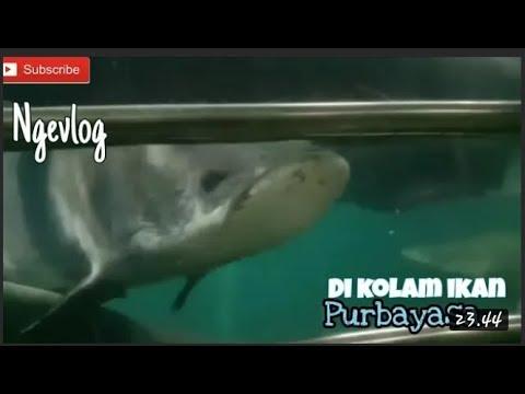 purbayasa