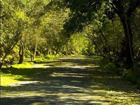 Parque Bicentenario #ElSalvador tesoro de la naturaleza, pulmón de #SanSalvador parte 1