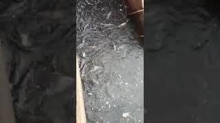 такую рыбалку бы каждый день
