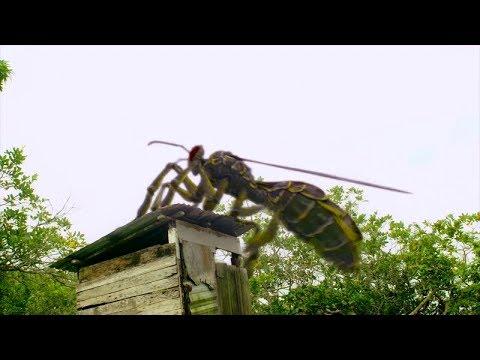 几分钟看搞笑科幻片《龙黄蜂》一种变异龙黄蜂!会喷三昧真火,逮谁烧谁,这下厉害了