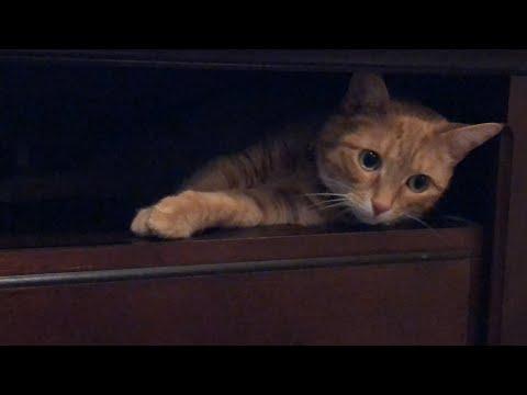Fat Cat Mya Finds A Comfy Spot! 😸