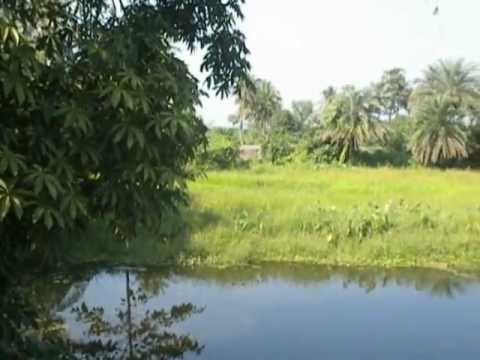 Bengal Greens   Beauty of Indian nature