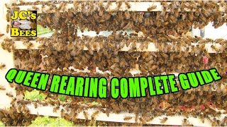 Grafting Queen Honey Bees (Queen Rearing)