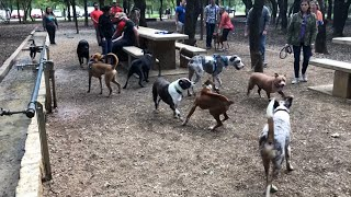 """""""At Phil Hardberger Dog park; Of chases, & crows!"""""""