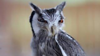 U sokolnika w Bieszczadach / Owls at the Falconer