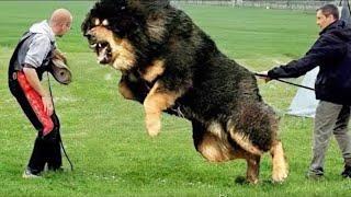 Новые Породы Собак, от Которых Мурашки по Коже! Топ 10