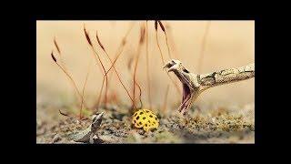 Скорость жизни. Красота и жестокость природы. Молниеносные атаки хищников. Discovery HD 29