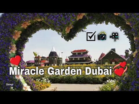 Miracle Garden (2018) | Full HD | 1080p
