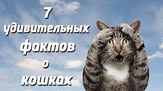 Слайд-шоу «7 удивительных фактов о кошках»