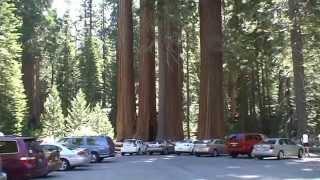 Niezwykły Świat - USA - Sequoia National Park - Grant Tree Trail cz 1
