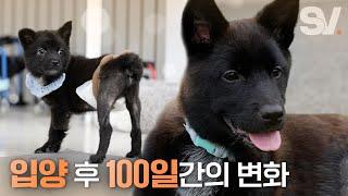 입양 100일 후 폭풍성장한 장애견 근황 (feat. 메이브)
