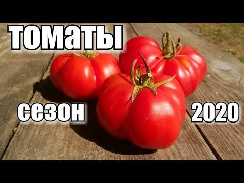 Сезон помидора 2020/ ОТЗЫВ-УРОЖАЙНОСТЬ-ХАРАКТЕРИСТИКА/#урожай #томаты #деревня #tomatoes #огород