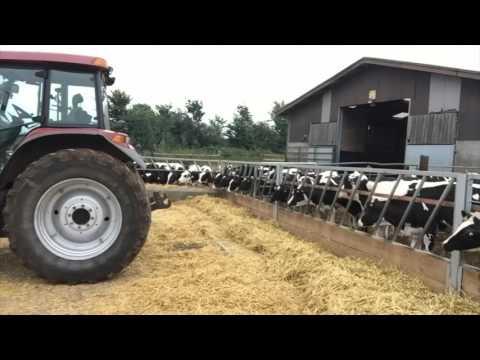 Heifer Feeding #farm24