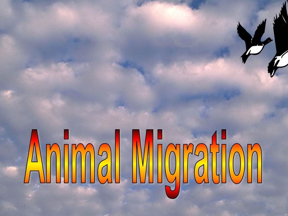 Animal migration: facts (science trek: idaho public television).