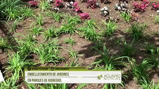 Embellecimiento de jardines en parques de Rionegro.