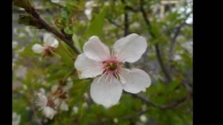видео Горшечные цветы в Саратове