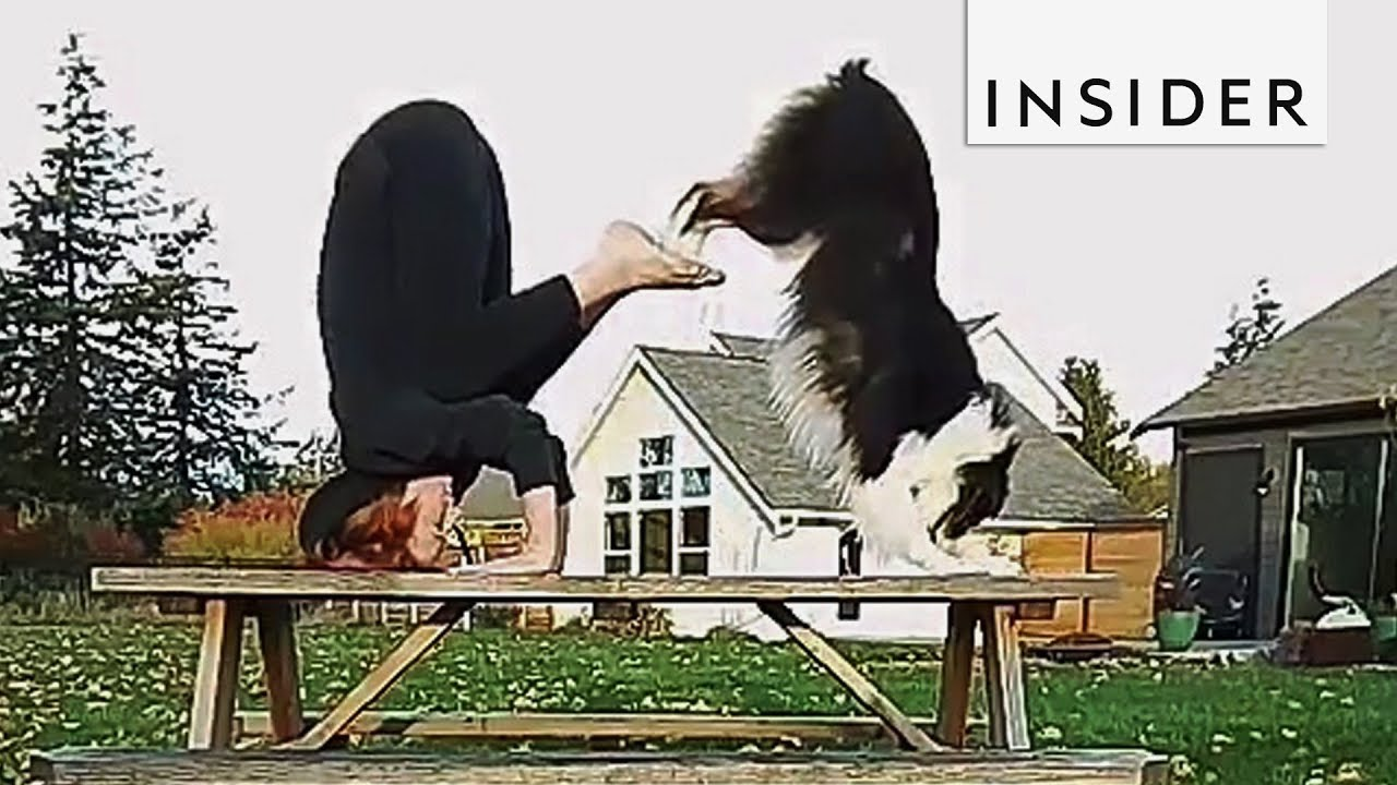 meet-the-dog-that-s-a-yoga-pro