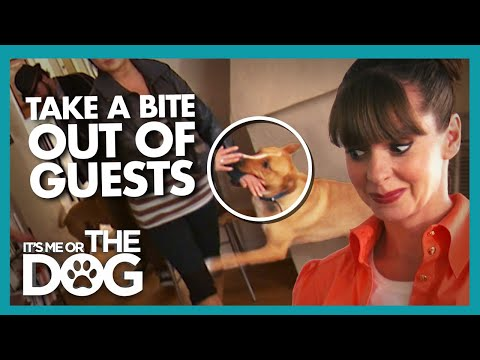 Owner Left Lonely After Guests Keep Being Scared Away | It's Me or The Dog
