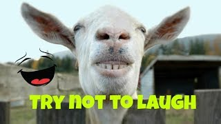 Try not to laugh challange|funny fails 2018| funny videos must watch