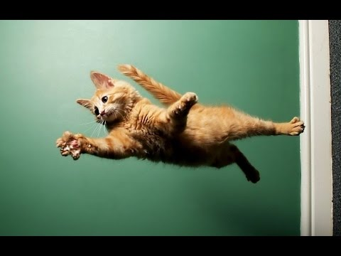 Funny Cats Jump Fails Compilation