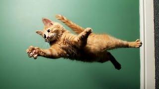Funny Cats Jump Fails Compilation