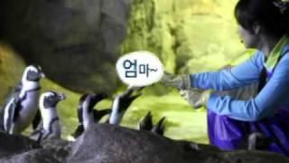 [부산아쿠아리움] 펭귄 피딩쇼