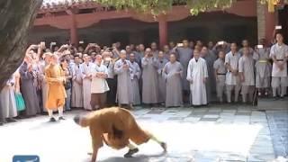 Shaolin monks minic animals in Kongfu show