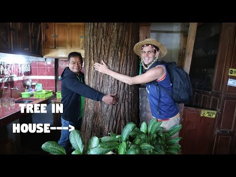THE FILIPINO MAN WITH AN INCREDIBLE HOUSE (There Are Trees Inside Of It!)