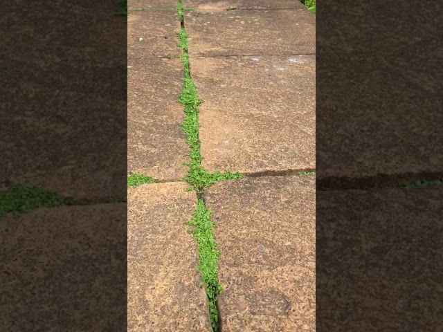 Patio Solutions with the Quarantine Gardener
