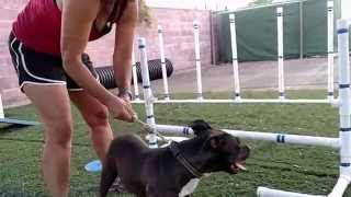 Redlands Animal Shelter Agility Course