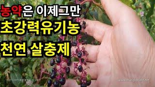 농약대신 천연살충제 &…