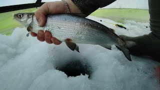 Убойная мормышка на крупного сига Клевая рыбалка Корюшка