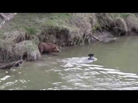 pups boar-listen carefully,very funny
