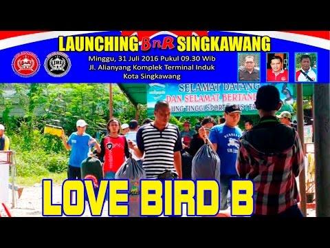 Kontes Burung Love Bird B | Launching BnR Singkawang
