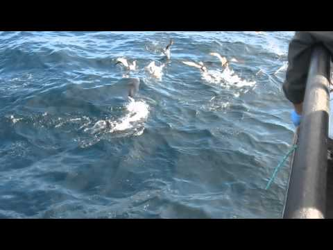 Pelagic Bird Trip 2012