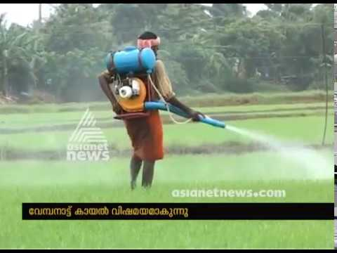 Pesticide applying in Kuttanad makes Vembanad lake polluted