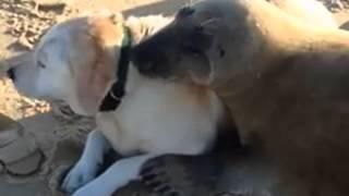 らぶりんちょかよ。犬とアザラシ、浜辺でひと時のランデブー
