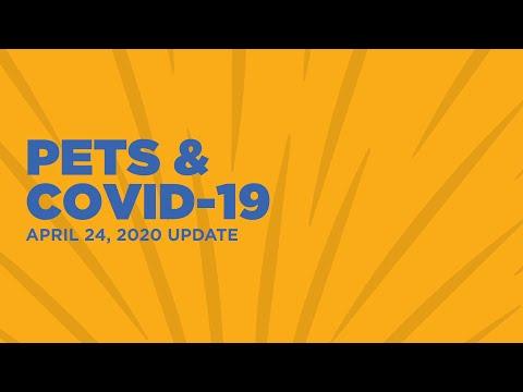 Pets Covid 19 Update