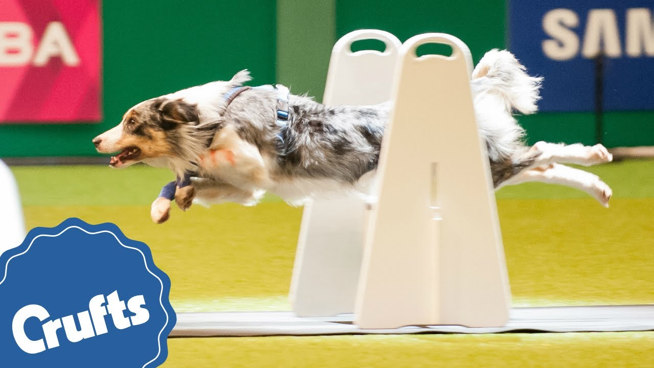 Trade Stands Crufts 2015 : Crufts is coming youtube