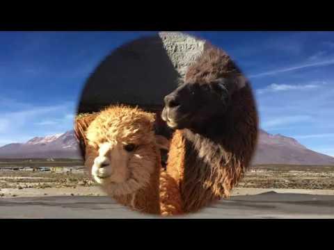 Best of Peru Teil1 -von Lima ins Colca-Tal- von Silvia Rapp TUI TRAVELStar Die ReiseExperten