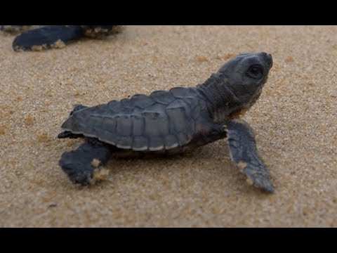 Saving Sea Turtles on World Sea Turtle Day!