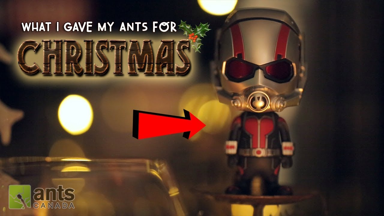 what-i-gave-my-ants-for-christmas-2017