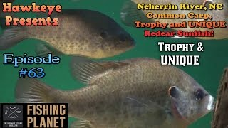 Fishing Planet - Ep. #63:  Neherrin River, NC: Common Carp, Trophy and UNIQUE Redear Sunfish!