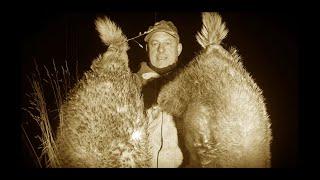 Ночная охота на барсука курьезный случай