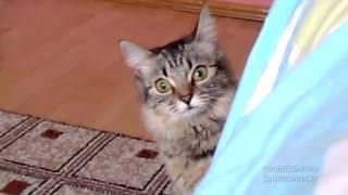 Самое страшное видео, смотреть видео приколы про кошек