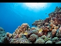 The Pacific Ocean | Coral Life Documentary | Sea Life | Under Water Australian Nature Film