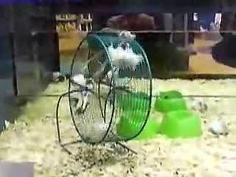 Amusement Park Mice
