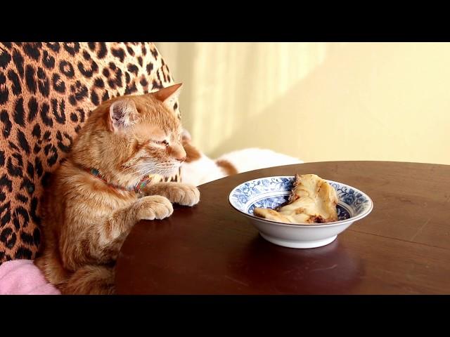 ちゃぶ台の上の煮魚と猫